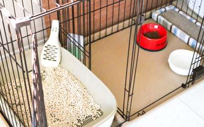 大阪府門真市の微酸性次亜塩素酸水のエルビーノの活用例は動物病院やペットショップやペットホテルの消臭や衛生管理や器具の消毒に